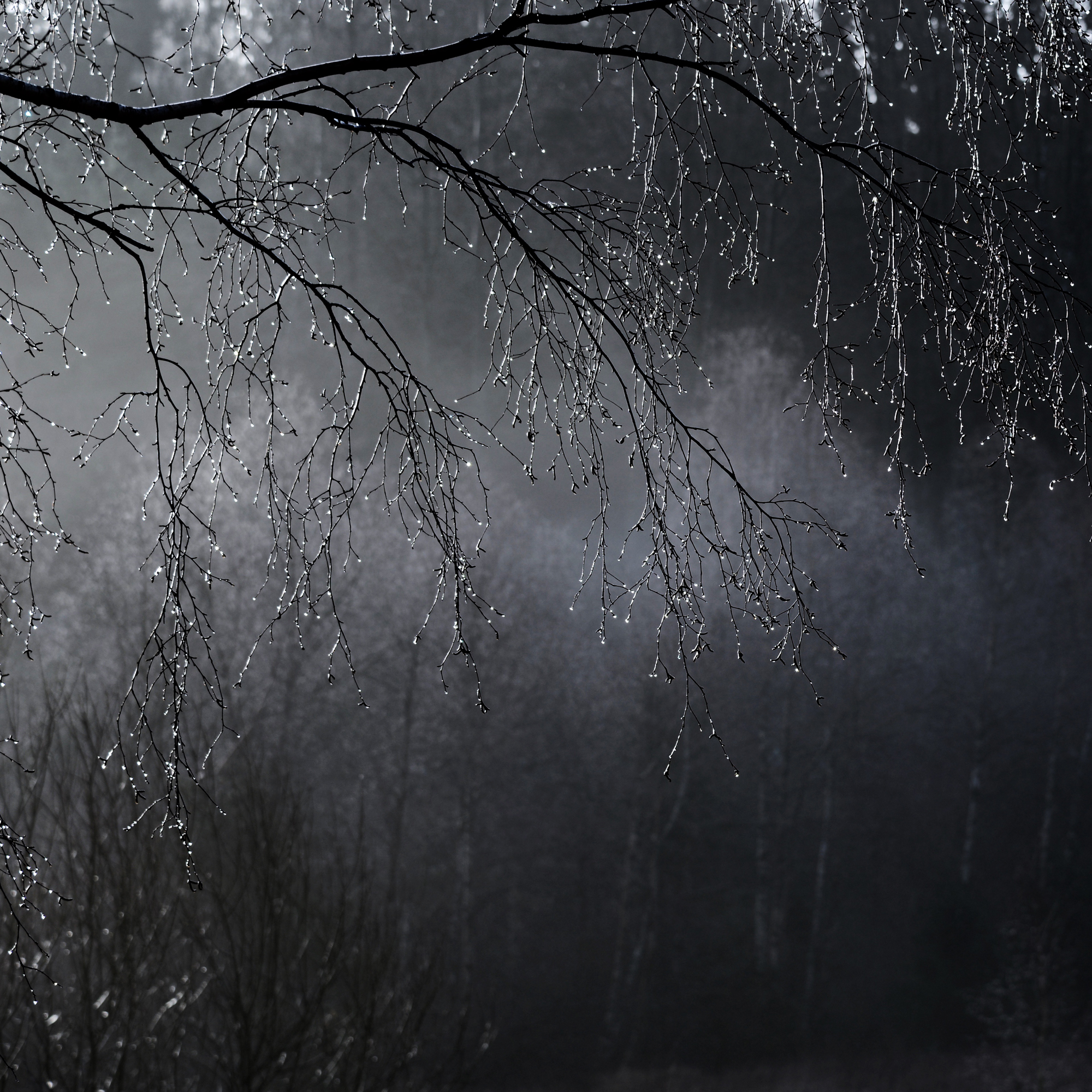 """""""Silverträd"""" av Birgitta Nilsson 3:a - KM1 Lena Höglander"""