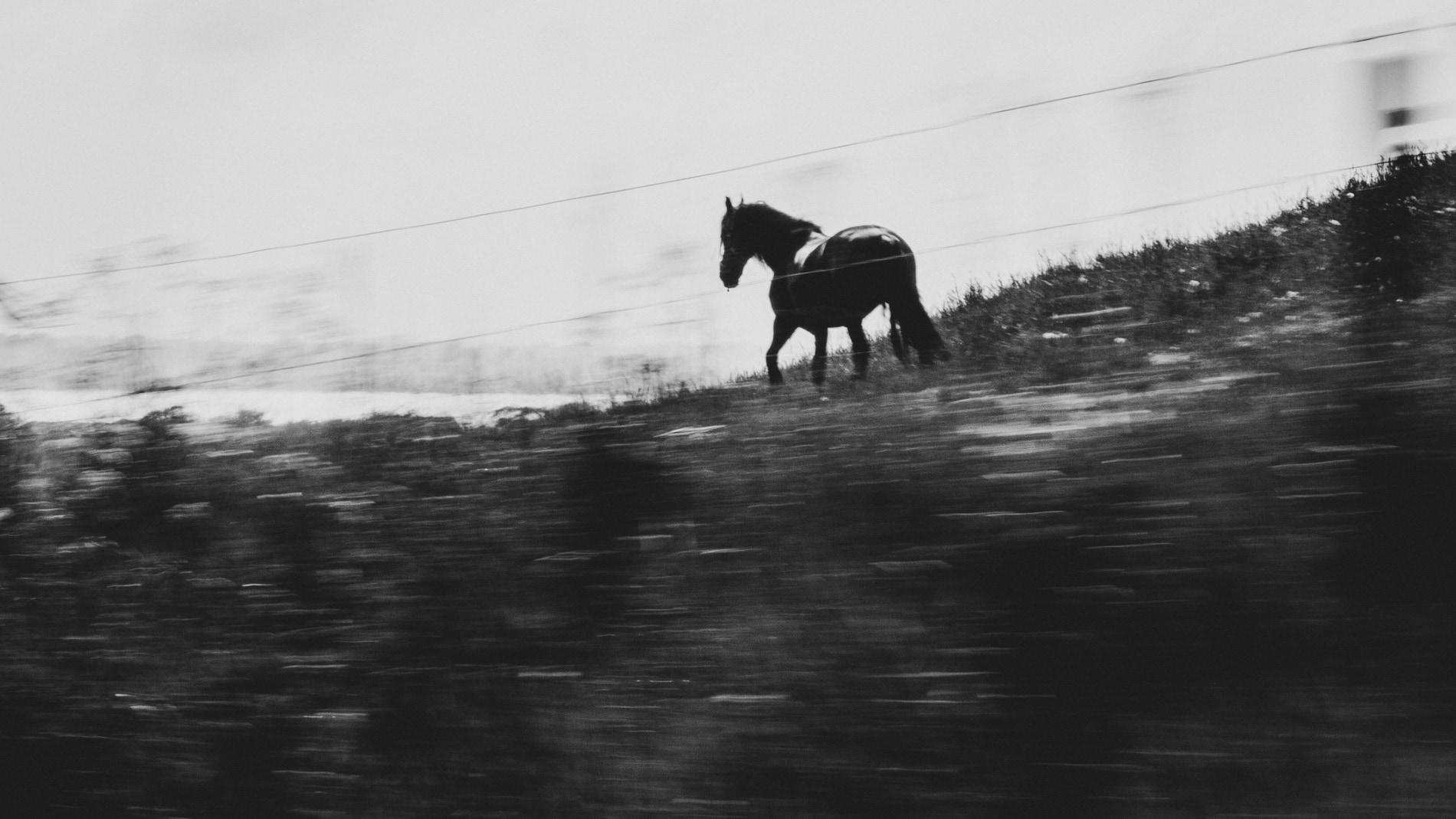 """""""På språng"""" av Emma Håkansson Visning - Klass A - Enstaka Digital bild - Västsvenska FotoExpon 2021"""